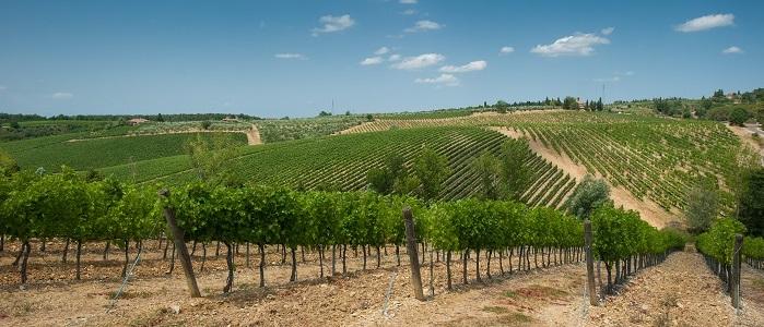 marsala-wine-sicily