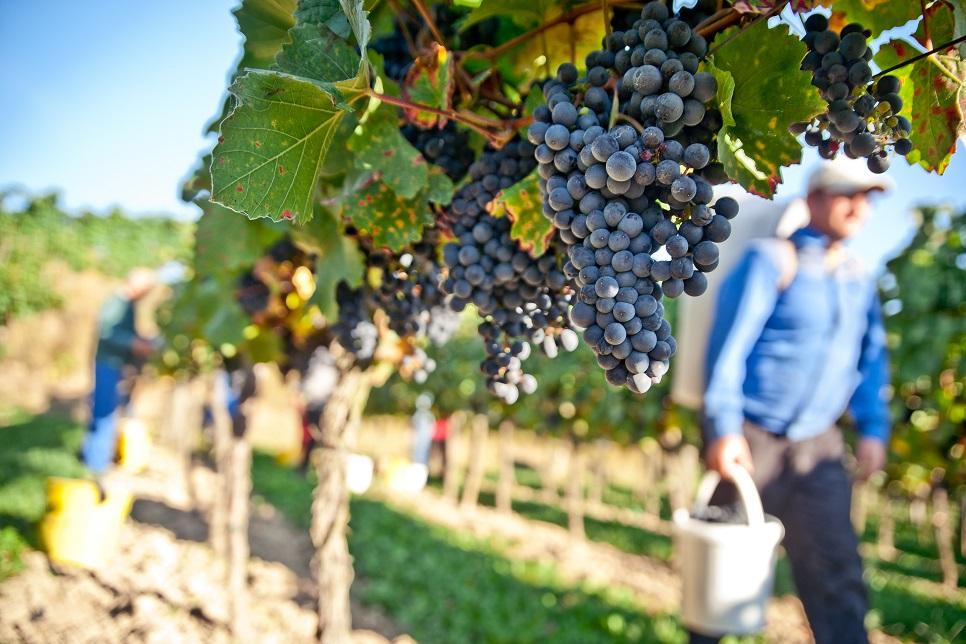Unique wine-tasting excursions in Sicily