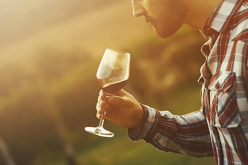 Wine tasting and vineyard visits