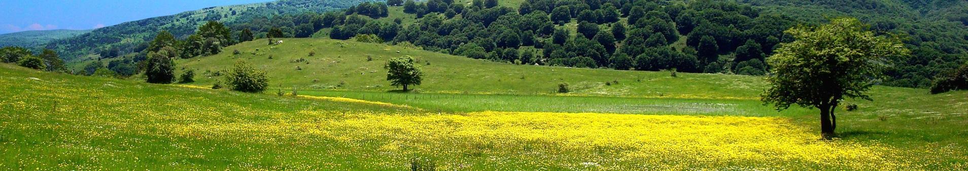 Ville e case vacanze vicino i Monti Nebrodi
